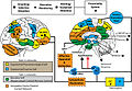 S-ART Mindfulness and brain1.jpg