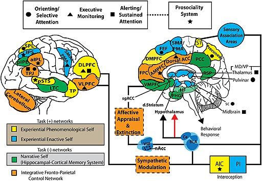 S-ART Mindfulness and brain1