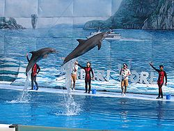 Dolphin show at Safari World