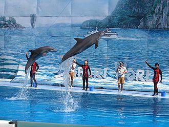 Khlong Sam Wa District - Dolphin show at Safari World