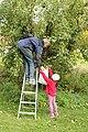 Samarbeide om epleplukking 2.jpg