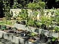 San Juan Botanical Garden - DSC07029.JPG