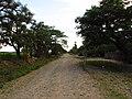 San Miguel, Colonia 2, y sus casas - panoramio.jpg