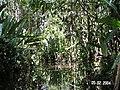 Sandoval , Tambopata - panoramio (35).jpg