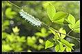 Saturniidae (7971668986).jpg