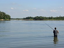 All for the river Sava | The green way