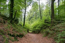 Schlangen - 2014-05-26 - LIP-066 - Lönspfad (12).jpg
