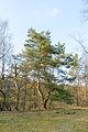Schlangen - 2015-04-09 - LIP-057 Senne noerdlich Oesterholz (49).jpg