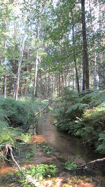 Le Scwharzbach dans la Réserve naturelle nationale des rochers et tourbières du Pays de Bitche, à la limite des communes de Sturzelbronn et de Philippsbourg en septembre 2012.