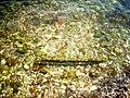 Sciacca Mare & sassi.jpg