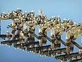 Seagulls, Leith Docks, Feb 2012 (6835818247).jpg