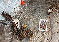Seeds and husk of Kigelia africana.JPG