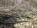 Self-guided nature trail at Latodami Nature Center - 10.jpeg