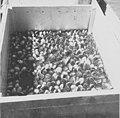 Seney National Wildlife Refuge - 1963 (5405050226).jpg