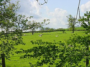 Sheep may safely graze. Looking north west fro...