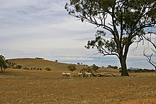 Drought-affected paddock in the New South Wales farming region of the Riverina