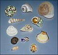 Shells-IZE-006.jpg