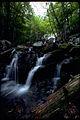 Shenandoah National Park SHEN9143.jpg