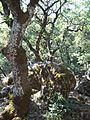Shik Ali Elhelwani forest (3).jpg