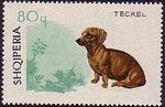 Shorthair-Dachshund Albania stamp.jpg