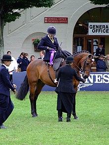 horse show wikipedia