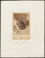 Simia satyrus - 1870-1879 - Print - Iconographia Zoologica - Special Collections University of Amsterdam - UBA01 IZ19800009.tif
