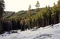 Slavkovský les západní svahy.jpg