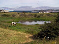 """Small pool known locally as """"Batleys Pond"""" - geograph.org.uk - 103793.jpg"""