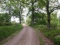 Small road - panoramio.jpg