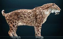 reconstitution d'un smilodon commun (Smilodon fatalis)