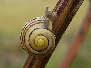 English: Snail Perfect weather for snails to c...