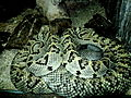 Snakes 11 (3).jpg