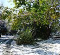 Snowstorm New Jersey October 2011 Number 5.jpg