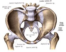 Foramen ischiadicum minus, pohled na pánev