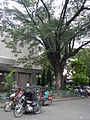 Solano,NuevaVizcayaChurchjf0331 03.JPG