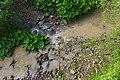 Soutok říčky Ulička (vlevo nahoře, čistá voda) s potokem Pľaša (vlevo dole, kalná voda), okres Snina.jpg