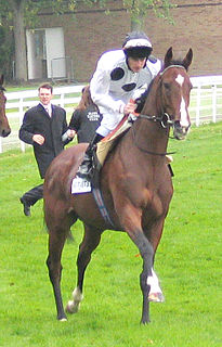 Soviet Song Irish-bred Thoroughbred racehorse