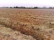 Sol p dologie wikip dia - Comment enlever les cailloux de la terre ...