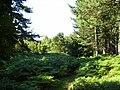 Spinnow wood - geograph.org.uk - 1041724.jpg