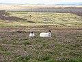 Spitalshield Moor (3) - geograph.org.uk - 551194.jpg