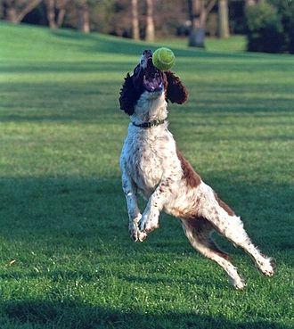 Spot Fetcher - Spot catching a ball