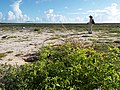 Starr-130915-1670-Solanum americanum-habit with Kim-Hardpan SW Inland-Laysan (24929897940).jpg