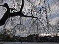 Stawek Barlickiego w Opolu - panoramio.jpg