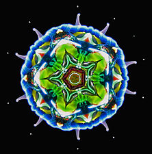 Steamscope™ no. 1 mandala image.jpg
