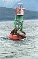 Steller Sea Lion10(js).jpg