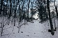 Steps to the Campground - St. Croix State Park (24579727197).jpg
