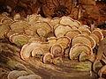 Stereum ostrea 146645.jpg