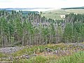 Storm damage, Sidwood, Kielder Forest - geograph.org.uk - 213117.jpg