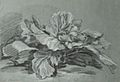 Study of a Cabbage LACMA M.2005.97.jpg