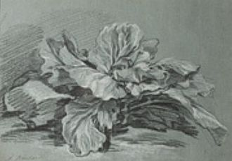 Michel Lullin de Chateauvieux - Study of a Cabbage by François Boucher, 1735